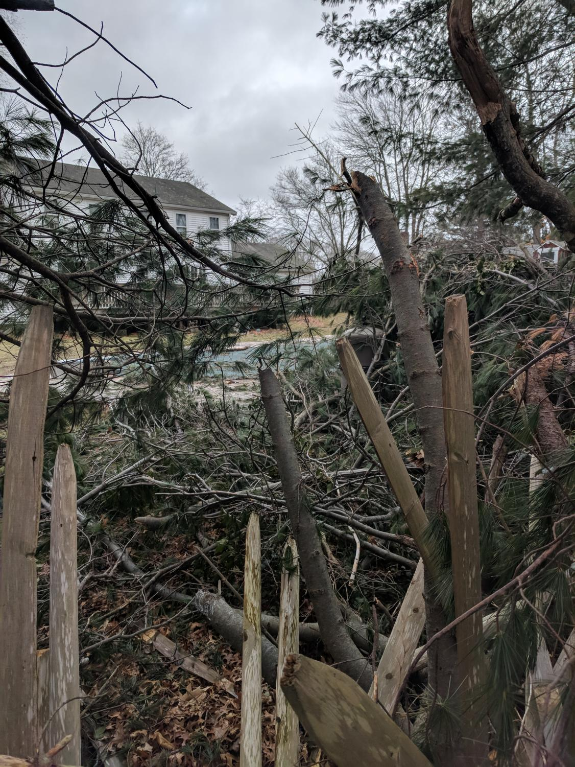 A broken fence and downed trees litter Ms. Fennelly's yard before spring cleanup begins.
