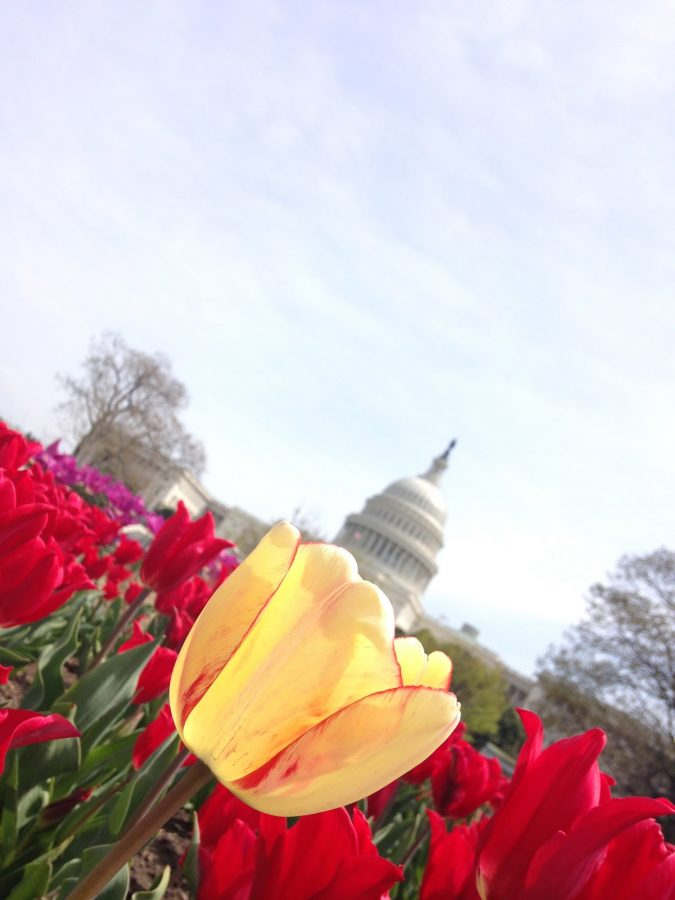 This picture was taken by Junior Catherine Wilk during her April vacation trip to Washington D.C.