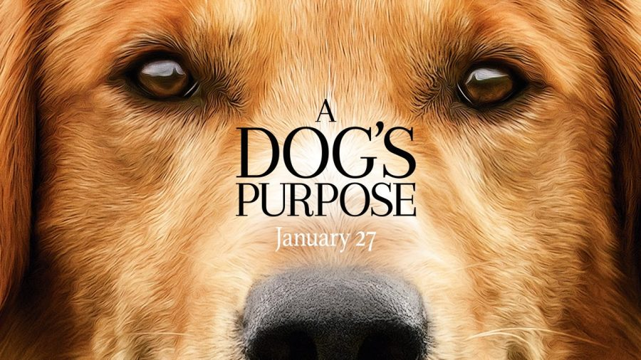 A Dog's Purpose Faces Much Controversy