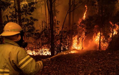 Wildfires Cause Massive Destruction in Australia