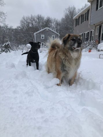 Walking my dogs in this weeks